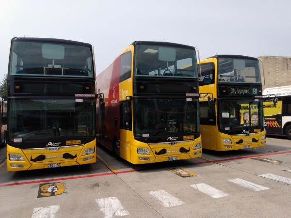 Three yellow B-line buses with moustaches